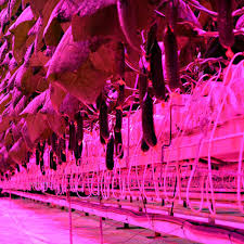 horticultural led grow lights horticulture lighting manufacturer led grow systems atop