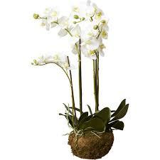 faux orchids house of hton phalaenopsis faux floral orchids flowers