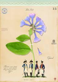 native plants in pennsylvania pa plants u2014 mf cardamone