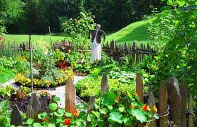 basic vegetable gardening tips http www hindustantimes com images kitchen gardens connect students with healthy food omar niode kitchen gardening tips drummondvilles front yard vegetable garden youtube kitchen
