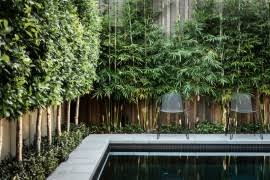 Create Privacy In Backyard Privacy Plants For Screening Your Yard In Style