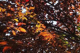 autumn colors picture of university botanic gardens ljubljana