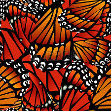 seamless monarch butterfly pattern wings on white in blue royalty