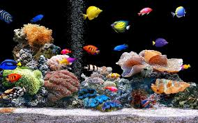 articles with cool fish tanks uk tag unique fish tank photo