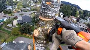 treework victoria bc spring 2014 hd rctree ca youtube