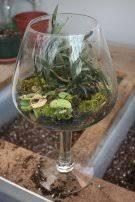 terrarium gardening garden u0026 greenhouse