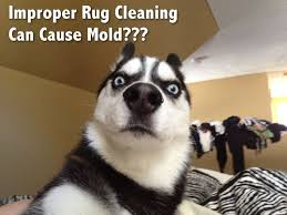 Carpet Cleaning Meme - simple 139 best carpet cleaning from dirty to new in several steps