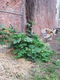 vertical squash trellises u2013 otr homegrown