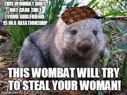 Wombat Memes - scumbag wombat