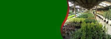 native plant centre foundry plant centre garden centre norfolk norwich