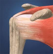 Anatomy Of Rotator Cuff Rotator Cuff Tears Injuries And Treatments