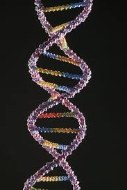 three examples of a single allele trait education seattle pi