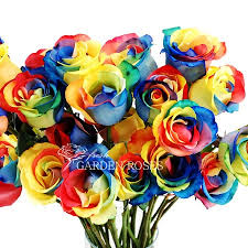 multi colored roses rainbow roses tie dye multi colored roses