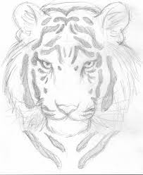 siberian tiger sketch by windwarrior on deviantart