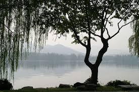 free photo china tree weeping willow leaves free image on