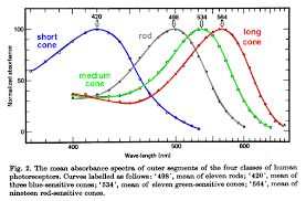 uv l short and long wavelength why is violet above blue in the visible spectrum violet is a