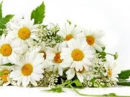 send flowers internationally the 25 best send flowers internationally ideas on