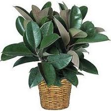 funeral plants funeral plant delivery 1st in flowers