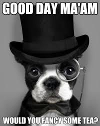 Boston Terrier Meme - photo monday morning boston terrier meme ibostonterrier com