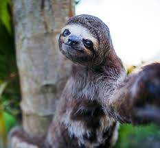 future pet pinterest sloth selfies and animal