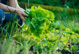 benefits of crop rotation in the garden planet natural