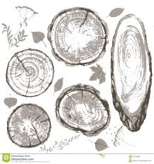 wood texture of trunk tree sketch stock vector image 66261481