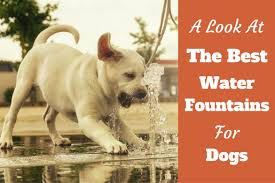 best pet fountain for dogs review 6 top choices for 2017