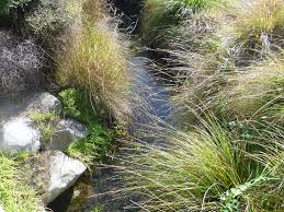 native plants christchurch native plants silkannthreades