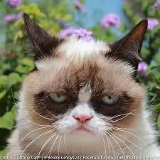 Grumpy Cat Meme Generator - i hate valentine s day grumpy cat meme generator