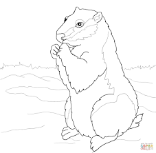 woodchuck coloring page free printable coloring pages