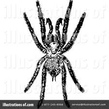 halloween spider clipart black and white spider clipart 1115736 illustration by prawny vintage