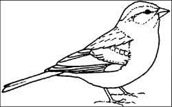 free bird education tools teachers