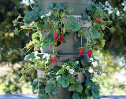 Diy Strawberry Planter by Diy Strawberry Tower With Reservoir Apiece Of Rainbow