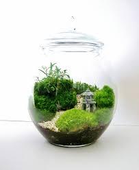 asian landscape moss terrarium with miniature path pagoda tree