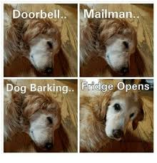 Dog Barking Meme - doorbell mailman dog barking fridge opens meme on me me