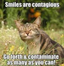Smiling Cat Meme - s media cache ak0 pinimg com 564x 89 04 bd