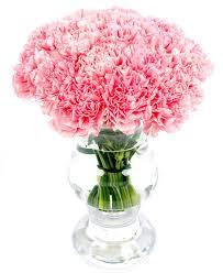 weekly flower delivery weekly flower delivery carnations pink