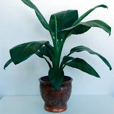 common house plants with pictures surprising plant large green