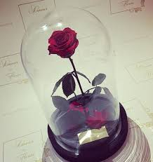 forever roses amour des fluers belle amour