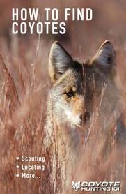 Can Coyotes See Red Light Best 25 Coyote Hunting Ideas On Pinterest Varmint Hunting