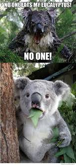 Meme Generator Koala - surprised koala meme generator imgflip on koala meme broxtern