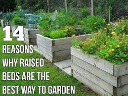 reasons why raised beds are the best way to garden