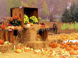 misc flowers thanksgiving autumn mood haystacks straw