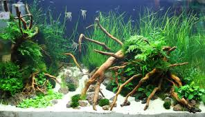 Aquarium Decoration Ideas Freshwater Http Www Aquamoss Net Aquarama 2011 Images Planted Tank 01 Jpg