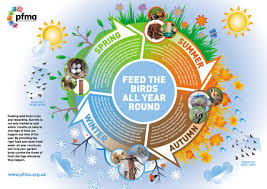 feeding garden birds and wildlife in nantwich gala wildlife