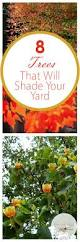 86 best shade trees images on pinterest shade trees landscaping
