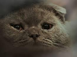 Sad Cat Memes - sad cat blank template imgflip