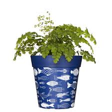 blue flowerpot colourful planter outdoor plant pot fish pattern