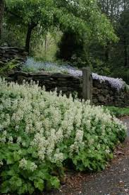 Flowering Shrubs New England - 54 best native plant garden images on pinterest native plants