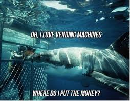 Funny Shark Meme - to insure domestic tranquility means to maintain law and order